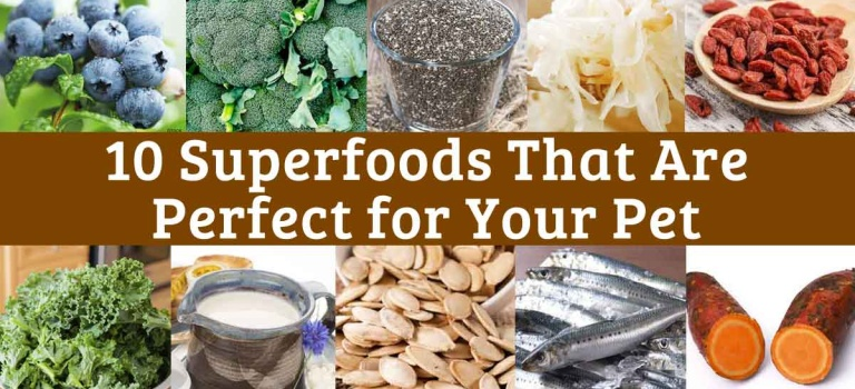 Superfoods for super doggies! The best foods you can give your pet to help …
